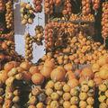 Hammamet ville de <b>vergers</b> et de jasmins