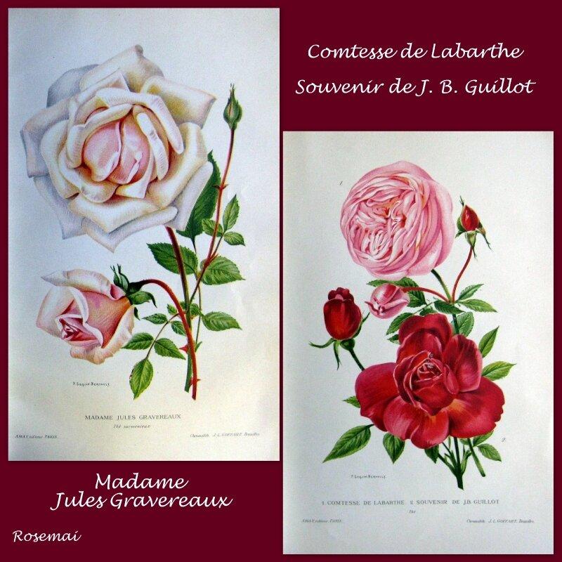 Les Plus Belles Roses au début du XXe siècle