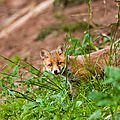 2014-05-30 LUX-1029