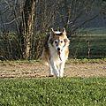 Lassie des