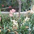 ensemble d'orchidée