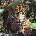 Le blog du jaguar