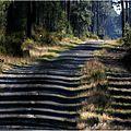 Prom'nons-nous dans les bois ... sur le chemin du bran.