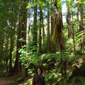 Rotorua et taupo