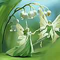 Lily of th