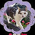 CHAT COLOMBE