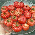 20 - tomate trèfle du togo - www.passionpotager.canalblog.com