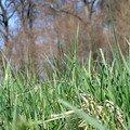 Copie de herbe