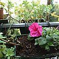 Jardinières d'avril