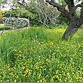 Le jardin du sud