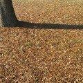 automne038