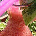 Celle qui boit rouge mais vert: thé rouge glacé à la pastèque et sirop cranberry framboise