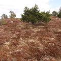 2008 04 24 Le nature sur le Mont Mézenc (2)