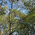 Z-9955 Forêt de Rihoult Clairmarais