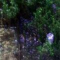 Meret au pays des merveilles P1200163
