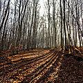 Randonnée du mardi 18 décembre après-midi - St Clément - Le <b>Carry</b>.