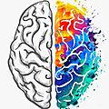 Cerveau : êtes-vous hémisphère droit ou gauche ?