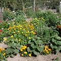 2008 08 18 Mes fleurs