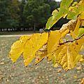[drôme] couleurs d'automne au parc de lorient
