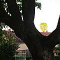 Des branches pour cadre !!!