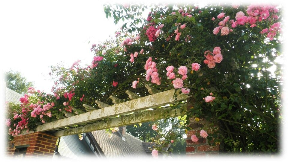 Porche de roses