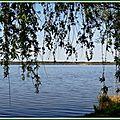 Lac Soustons 1204156