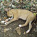 L'assassinat des animaux errants avant l'arrivée massive des touristes