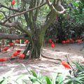 Jurong birds park 099