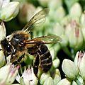 Qu'en est-il des ruches, des abeilles et du <b>voisinage</b>…?