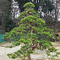 Comment reconnaître un arbre taillé de qualité ?