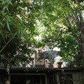 0577 - Terrasse dans les arbres Aix 16 juin