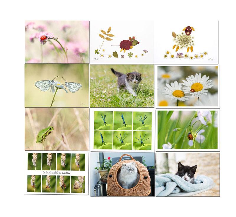 cartes-petits-animaux-écolo