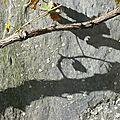 branche sur palis