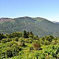 Les bois de Castillon et Souriguères...