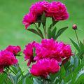 Fleurs du Jardin des plantes