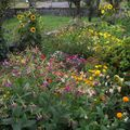 2009 08 25 Une partie de mon jardin de fleurs