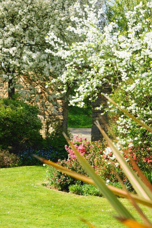jardin printemps 2009 038