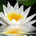 Qu'est ce que le védanta? son evengile et son universalité!