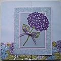 Mini-album Hydrangeas avec les photos du Jardin d'Ewen