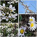 Fleurs du jardin (7)