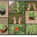 Week-end sous le signe du jardinage