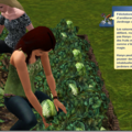 Challenges sims 3