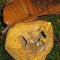 Un drôle de champignon !
