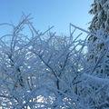 2008 12 28 Cerisier enneigés et givré