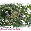 Flore...