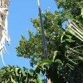 11 Drôle de fleur de palmier