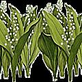 fleurs-et-muguets--1-