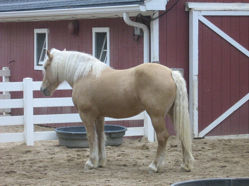 1024px-Draft_horse