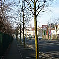 Rue Jules Auffret, les micocouliers.