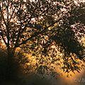 arbre-aurore15-01